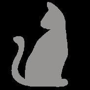 Tarots Animaux - ICD Collections grossiste cadeau et importateur d'accessoires ésotériques